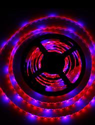 36W LED Aufzuchtlampen 300 SMD 5050 lm Rot / Blau Wasserdicht DC 12 V 2 Stück