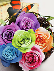 Nine Gradient Rose Flowers/Box Preserved Fresh Flowers