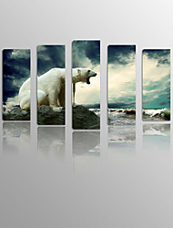 Howling Polar bear on Canvas Wood Framed 5 Panels Ready to hang for Living Decor