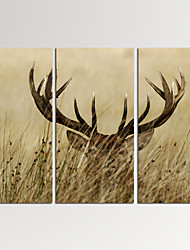 VISUAL STAR®3 Panel Wall Decor Deer Stag Wall Art Animal Pictures Print Ready to Hang