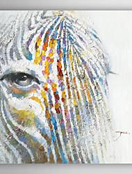 mão do retrato de animais pintura a óleo pintado de uma zebra com quadro esticado