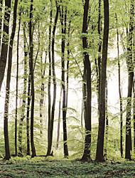 Mural Árvores/Folhas Papel de parede Contemporâneo Revestimento de paredes,Tela Sim