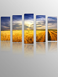 Grassland on Canvas wood Framed 5 Panels Ready to hang for Living Decor