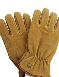 коровьей холодной доказательство перчатки