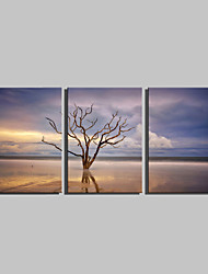 E-HOME® Stretched Canvas Art Water Tree Decoration Painting Set of 3