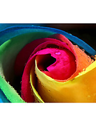 3D Effect Non-woven Large Mural Wallpaper Colorful Roses Art Wall Decor Wall Paper