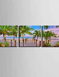 E-HOME® Stretched Canvas Art Woods on The Beach Decoration Painting  Set of 3