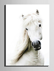 E-HOME® Stretched Canvas Art The White Horse Decoration Painting  One Pcs