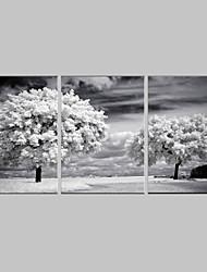 Дизайнерский сет картин, набор из трех единиц