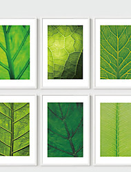 E-HOME® Framed Canvas Art,  Green Leaf Framed Canvas Print One Pcs