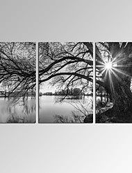 VISUAL STARSundowners Wall Art for Home Decor 3 Panels Giclee Print on Canvas Ready to Hang