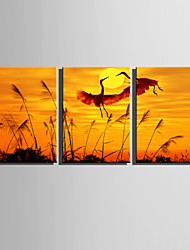 E-HOME Stretched Canvas Art The Crane in The Sunset Decoration Painting  Set Of 3