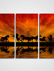 3 Panels Sunset Clouds and the Running Horses Printed on Canvas Modern Canvas Art for Office Decoration Unframed