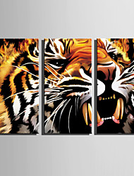 E-HOME Stretched Canvas Art Roaring Tiger Decoration Painting Set Of 3