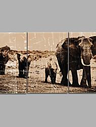 canvas Set Impressão em tela sem moldura Animal Moderno,3 Painéis Tela Horizontal Impressão artística Decoração de Parede For Decoração