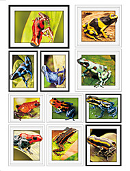 Frog Frame Drawing PVC Decorative Skin Wall Stickers for The Office Or Living Room