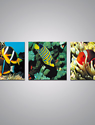 Stretched Canvas Prints  Fish  Picture Print Contemporary Art for Livingroom Decoration