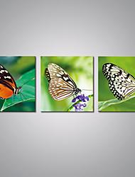 Estampados de Lonas Esticada Vida Imóvel Moderno,3 Painéis Tela Horizontal Impressão artística Decoração de Parede For Decoração para casa