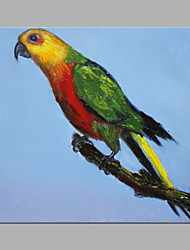 IARTS® Oil Painting Parrot Bird Animal Wall Art Acrylic Canvas Wall Art For Home Decoration