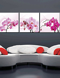 Stretched Canvas Art Floral Orchid Set of 3