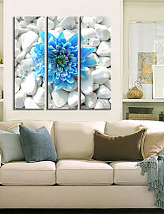 Stretched Canvas Art Floral Blue Flower in the Stones Set of 3