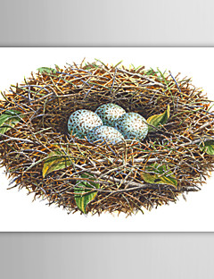 Op gespannen doek kunst Vakantie Kardinaal Nest door Dempsey Essick