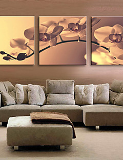 Stretched Canvas Art Floral Tender Orchid Set of 3