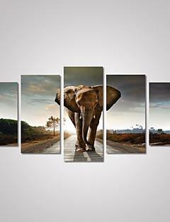 Животное / Пейзаж / Фото / Религия Холст для печати 5 панелей Готовы повесить , Горизонтальная
