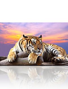 Животное / Пейзаж / Фото / Модерн / Путешествия Холст для печати 1 панель Готовы повесить , Горизонтальная