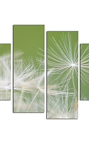 VISUAL STAR®Dandelion Flower Canvas Art High Quantity Canvas Painting Ready to Hang