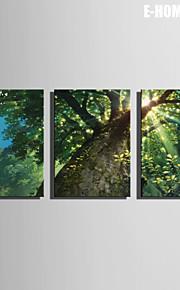 E-Home® Leinwand bist der Baum Dekoration Malerei Set von 3