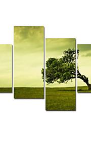 visuell star®tree sträckta canvas utskrift hög kvalitet väggkonst redo att hänga