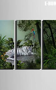 전자 home® 캔버스가 3 흰색 호랑이와 앵무새의 장식 그림 세트 예술 뻗어