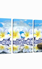 visuell star®frangipane blomsterdekorasjoner lerret utskrift stein veggen henger bilde klar til å henge