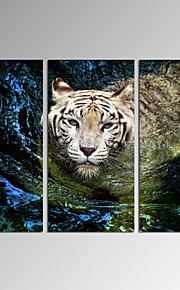 Still Life / Dyr / fritid / Botanisk / Moderne / Romantikk / Pop Art Lerret Print Tre Paneler Klar til å henge , Lodrett
