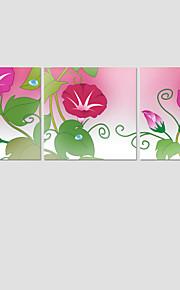 Botanisch / Modern Canvas Afdrukken Drie panelen Klaar te hangen , Vierkant