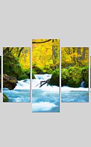 Botanisch / Modern Canvas Afdrukken Vijf panelen Klaar te hangen , Horizontaal