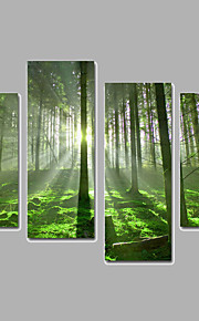 Landschap / Botanisch Canvas Afdrukken Vier panelen Klaar te hangen,elke vorm