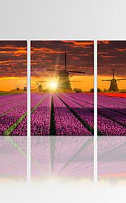 Personnage / Fantaisie / Loisir / Photographie / Musique / Patriotique / Moderne / Romantique Toile Trois Panneaux Prêt à accrocher,