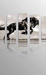 Running Horse on Canvas Wood Framed 5 Panels Ready to hang for Living Decor
