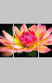 Botanisch / Modern / Landschap Canvas Afdrukken Drie panelen Klaar te hangen,Vierkant