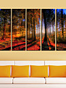 Toiles Tendues Art Woods paysagistes a Sunrise Set de 5