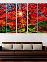 e-Home® sträckta canvas konst lönn dekoration målning uppsättning av 5