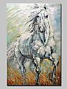 Peint a la main Abstrait Animal Peintures a l\'huile,Moderne Realisme Un Panneau Toile Peinture a l\'huile Hang-peint For Decoration