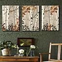 Protezala Canvas Art Botanički Maple Tree Set od 3