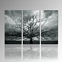 Volný čas / Fotografie / Moderní / Romantické / Pop Art / Cestování Na plátně Tři panely Připraveno k Pověste , Vertikální